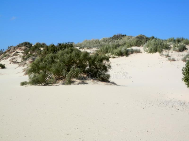 Öde stranddyn på blåsig dag arkivbild