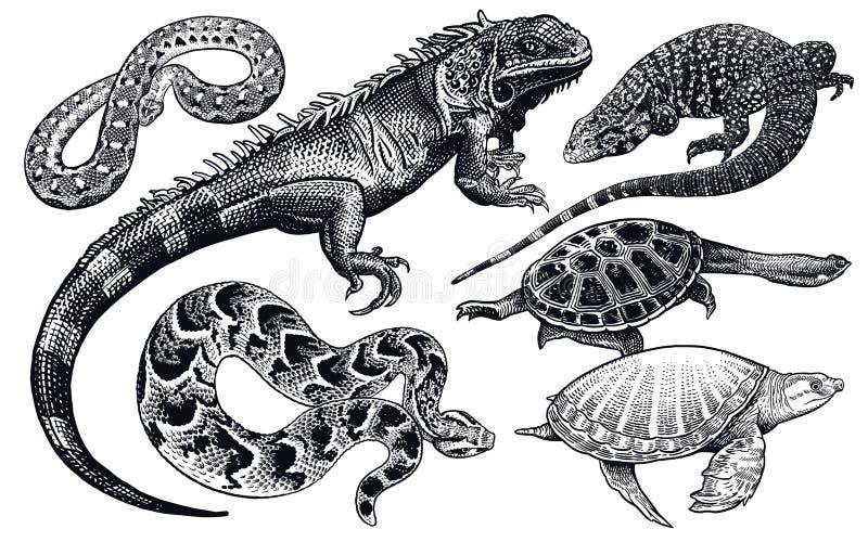 Ödla-, orm- och sköldpaddauppsättning Isolerad svart skissar på vit bakgrund vektor illustrationer