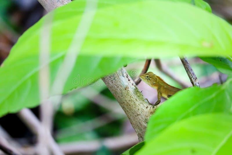 Ödlan är skinn under busken som flyr från jägaren royaltyfri bild