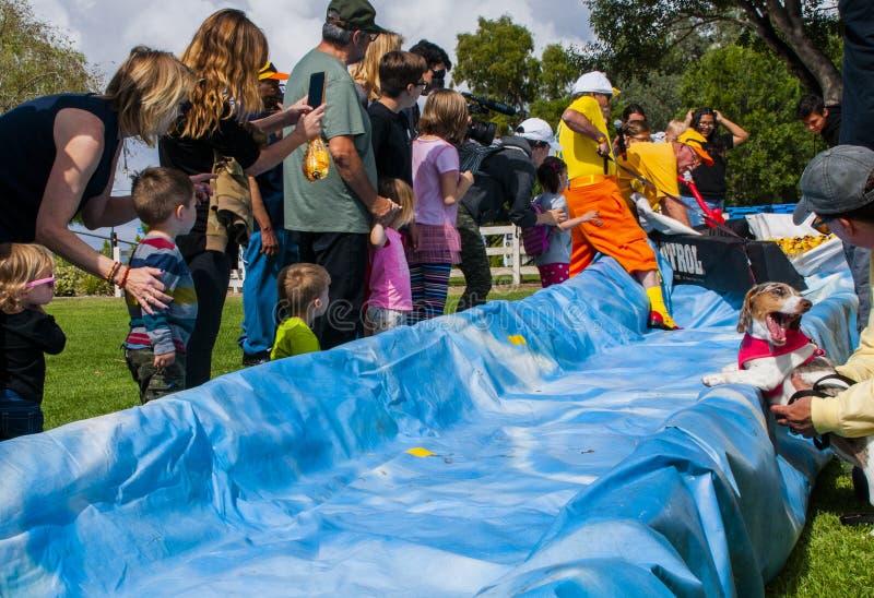 Öffnen der Wasser-Rutsche, um das Rennen der Gummientchen anzufangen lizenzfreies stockfoto