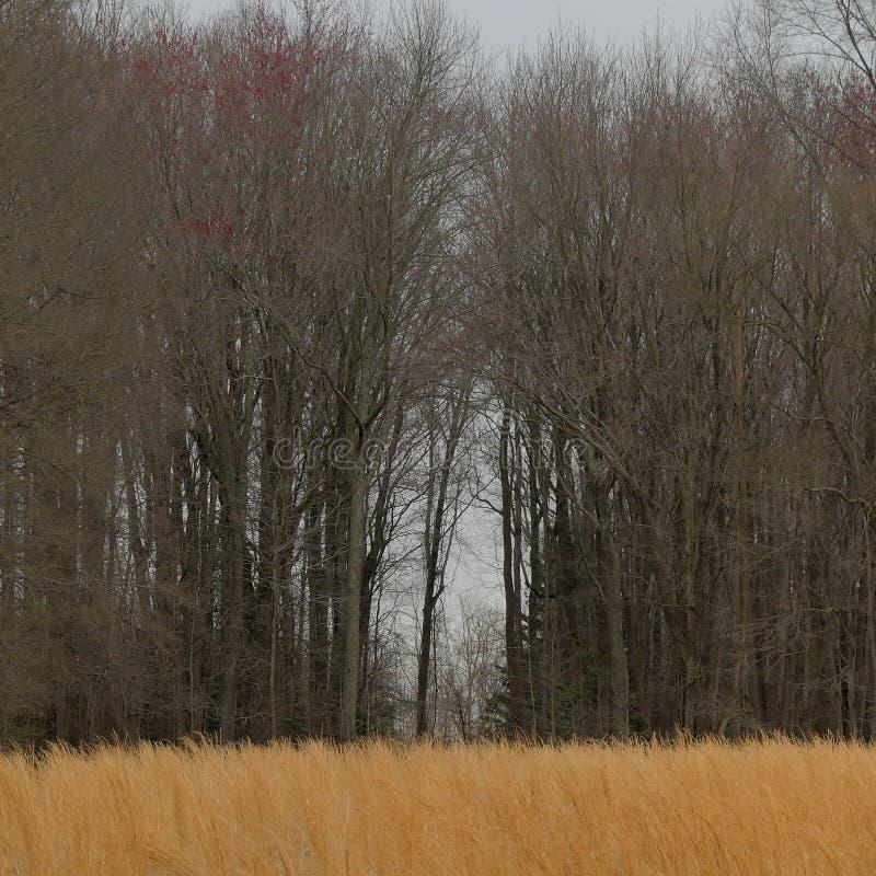 Öffnen in einer Wand von Bäumen stockbild