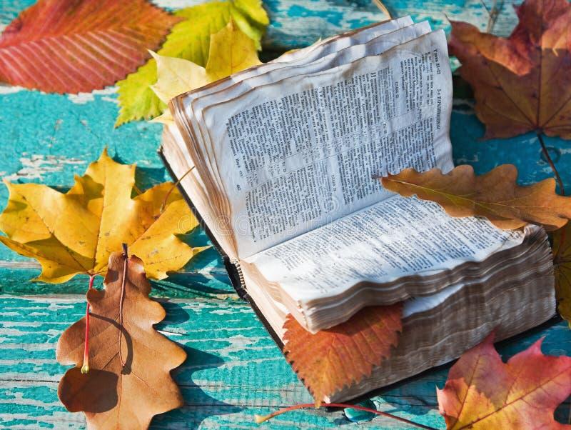 Öffnen Sie die Bibel und den gefallenen Herbst lizenzfreie stockfotos