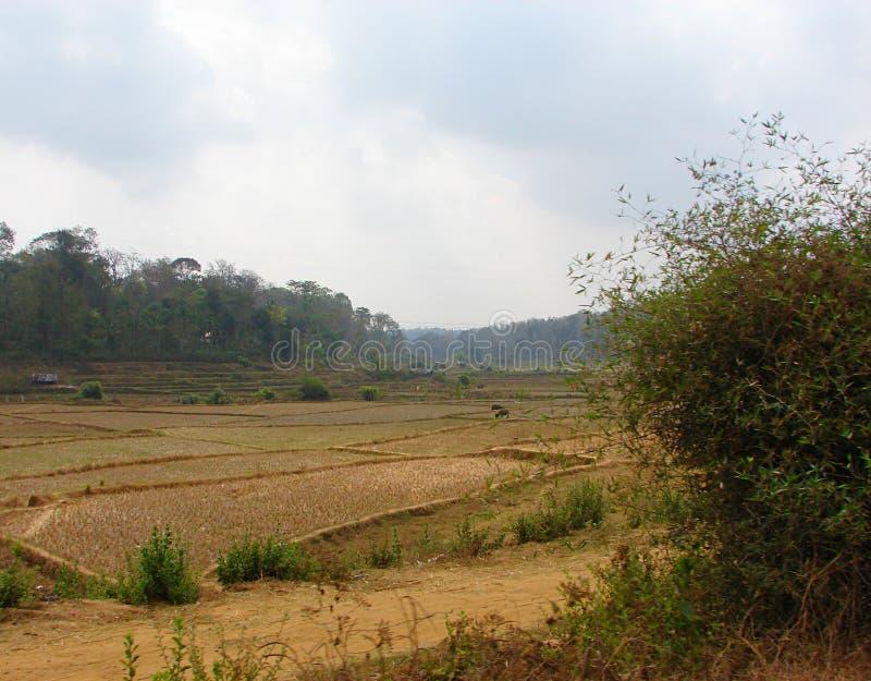 Öffnen Sie Fileds in einem indischen Dorf - Landschaft stockbilder