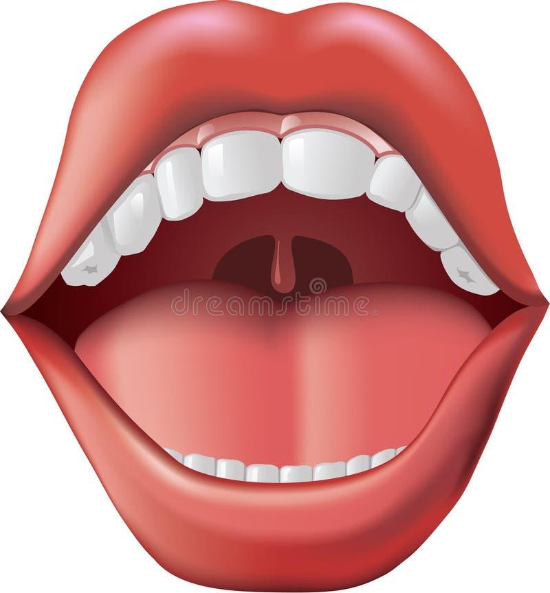 Öffnen Sie Mund stockbilder