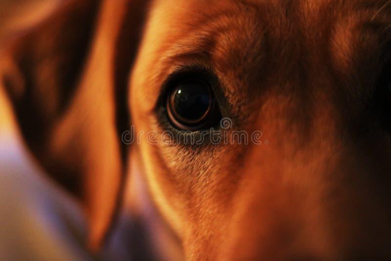Öga av blinkern royaltyfri foto
