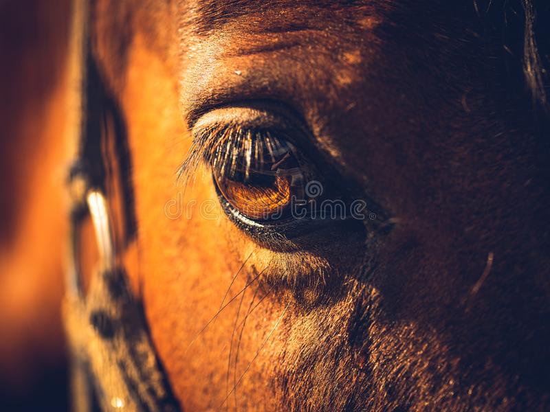 Öga av en brun häst i sol arkivfoto