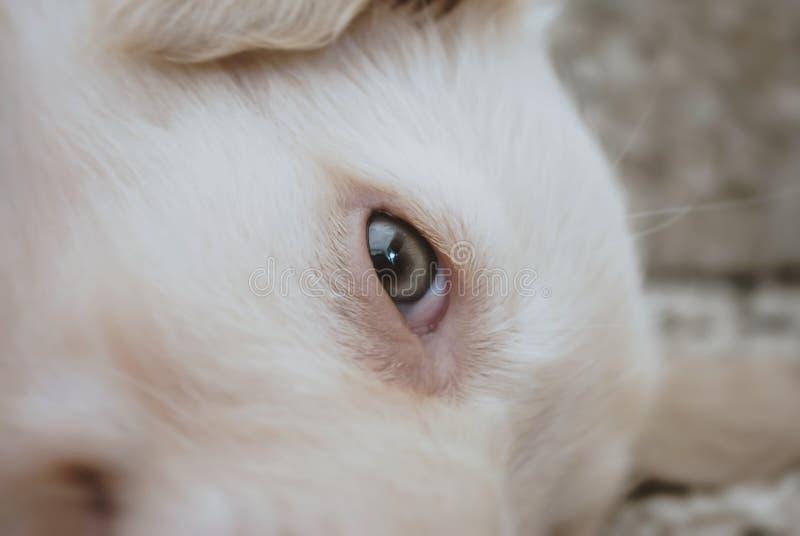 Öga av en hund royaltyfri bild