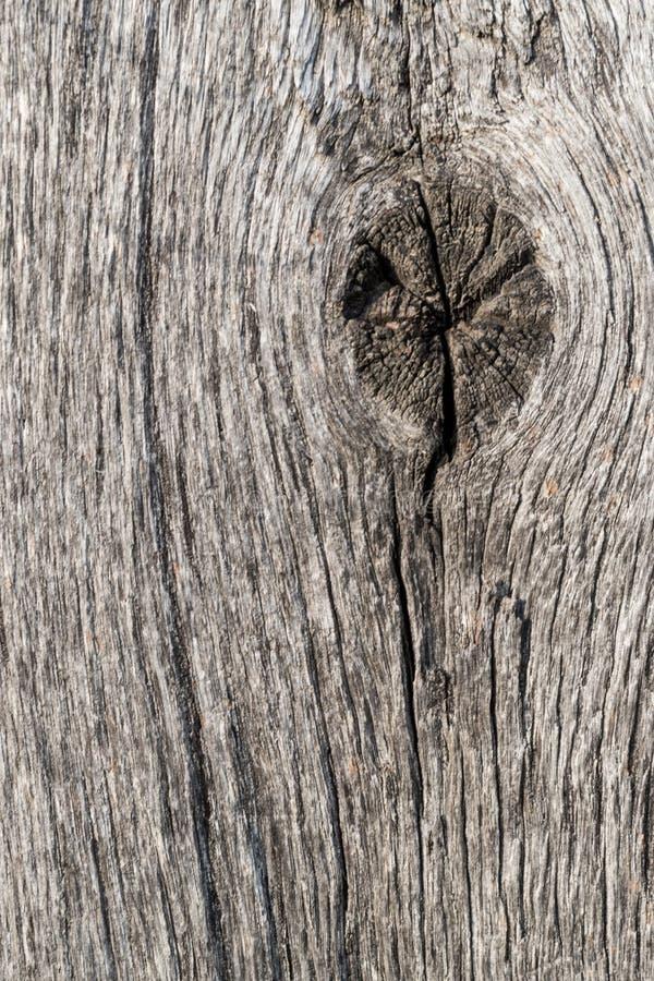Öga av trä fotografering för bildbyråer