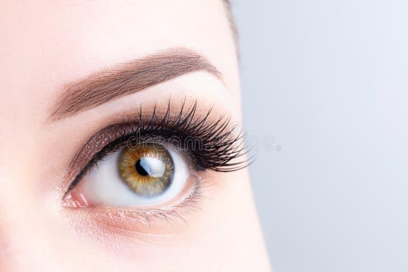Öga med långa ögonfrans, härlig makeup och ljust - brun ögonbrynnärbild Ögonfransförlängningar som microblading, tatuering som är fotografering för bildbyråer