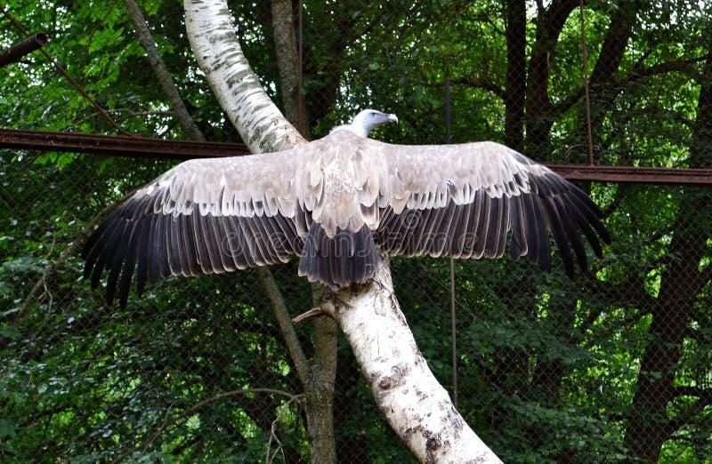 Öga på ett träd, fördela vingarna fotografering för bildbyråer