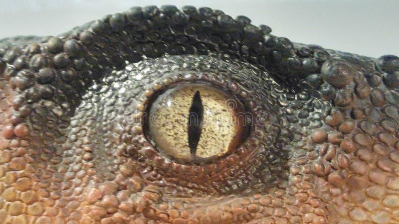 Ögat av en dinosaurie royaltyfria bilder