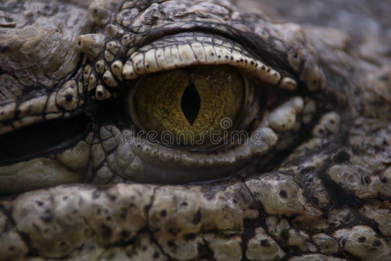 Ögat av en nile krokodil arkivfoto