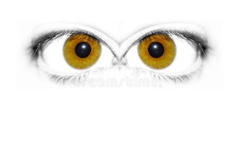 Download ögon stock illustrationer. Illustration av framsida, ögon - 500211
