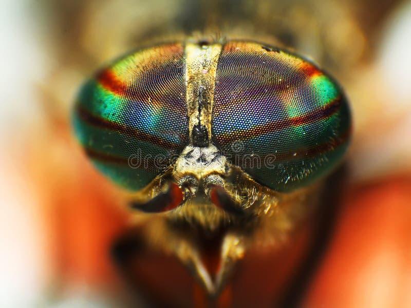 Ögon av ett kryp closeup för huvud för hästfluga royaltyfri foto