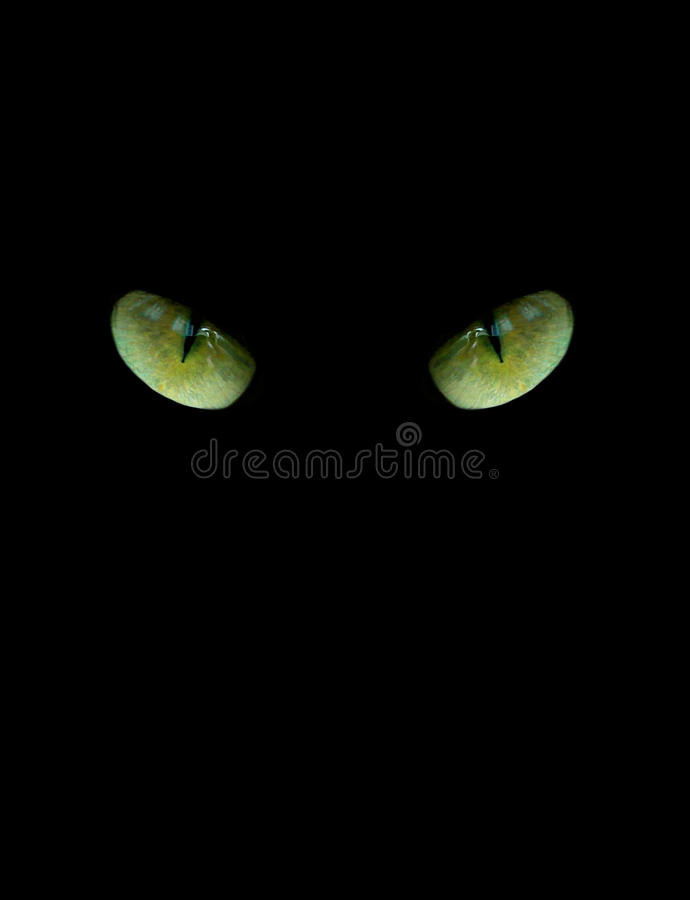 Ögon av katten på den svarta bakgrunden royaltyfria foton