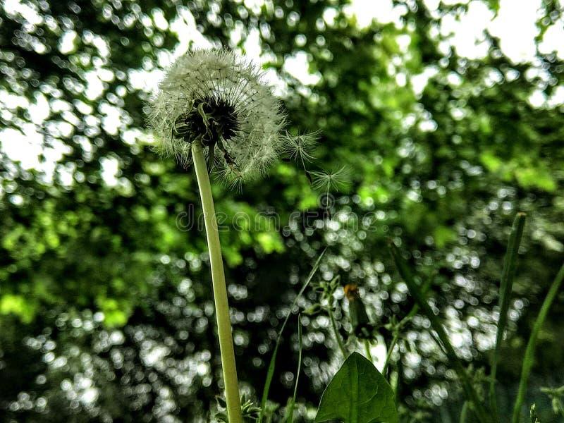 Ögonblick i natur fotografering för bildbyråer