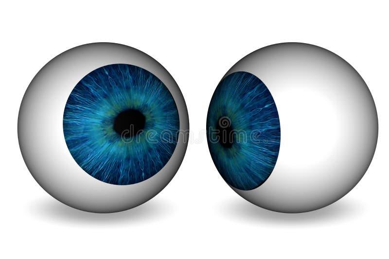 Ögonboll vektor illustrationer