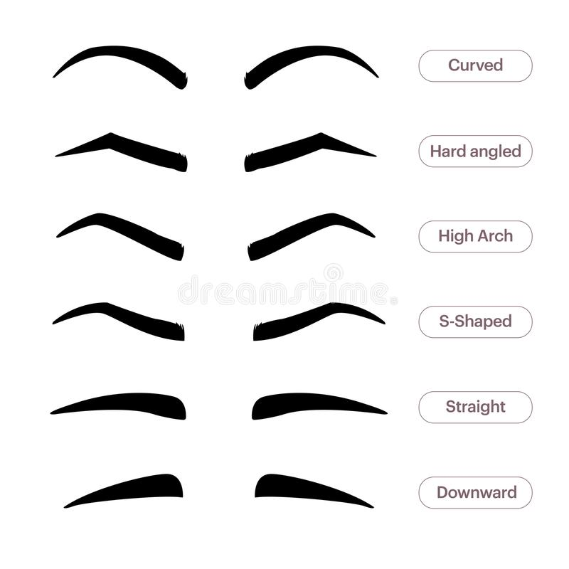 Ögonbrynformer Olika typer av ögonbryn Klassisk typ och annan bräm Vektorillustration med olikt vektor illustrationer