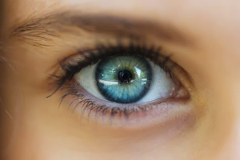 Ögoncloseupen fotografering för bildbyråer