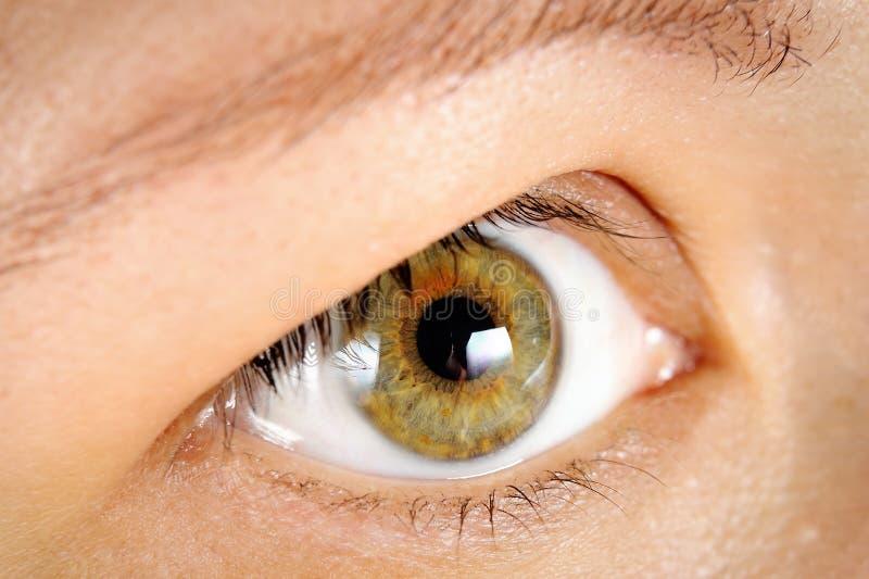 ögonhuman arkivfoton