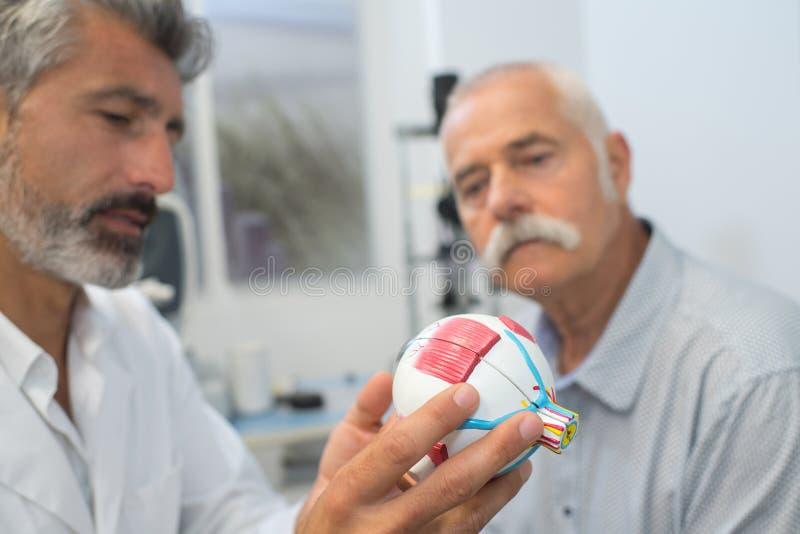 Ögonläkare med ögonmodellen royaltyfri foto