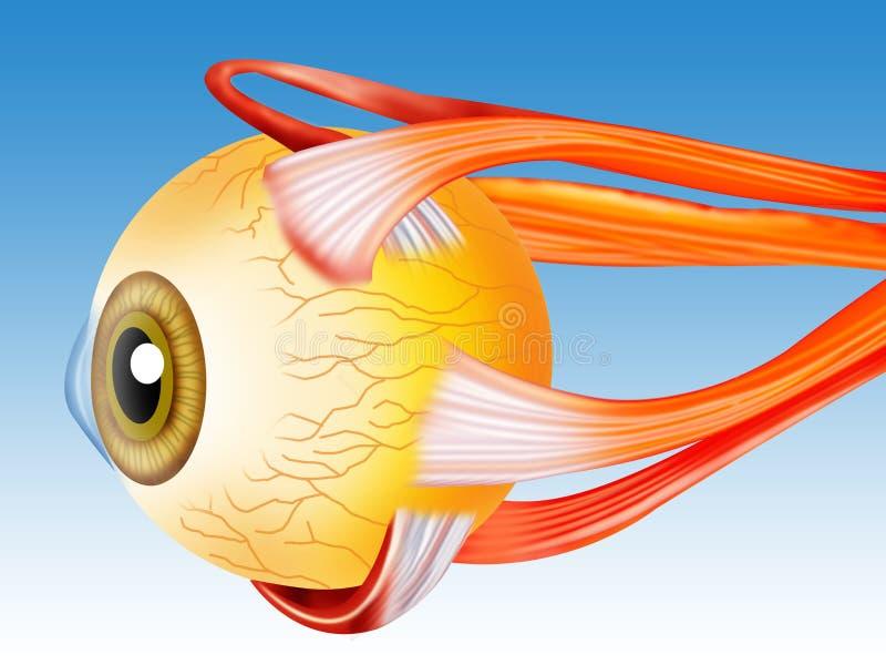 ögonstruktur stock illustrationer