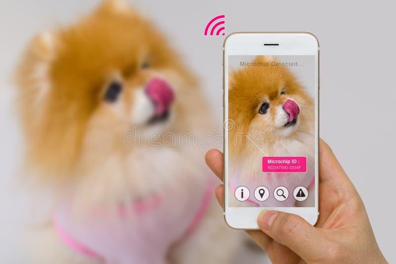 Ökad verklighet av den älsklings- mikrochipens App på Smartphone skärmbegrepp royaltyfri fotografi