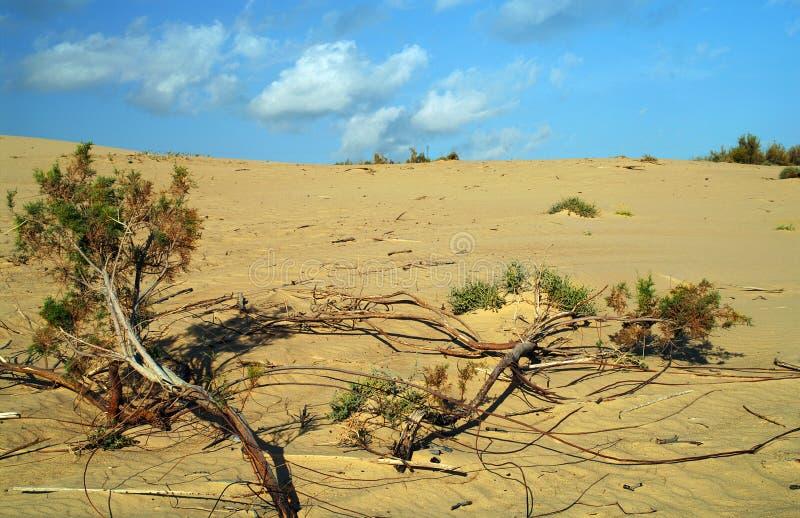 öken arkivfoto