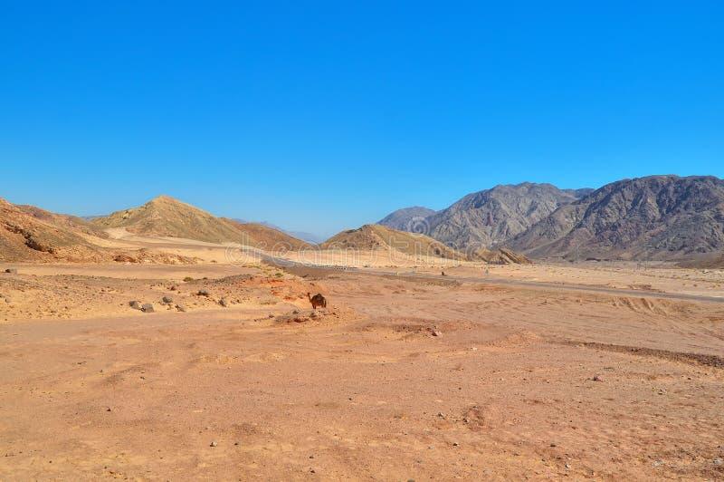 Öken-bergig terräng, asfaltväg med staket och vägmärken som lämnar i avståndet, färgrik sand och berg av mest limest arkivbild