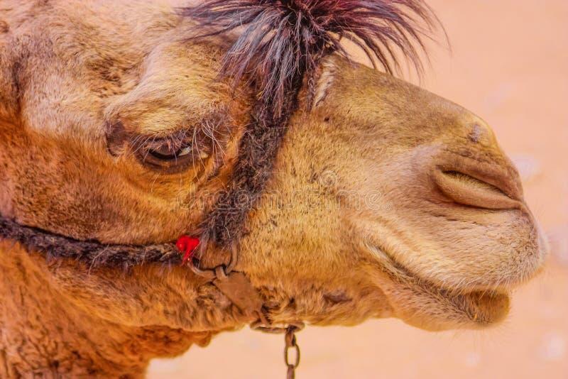 Öken i Egypten royaltyfria foton