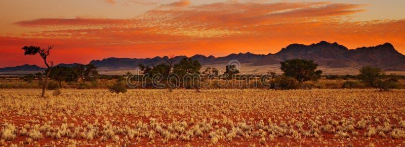 öken kalahari arkivfoto