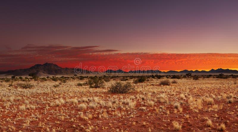 öken kalahari namibia royaltyfri fotografi