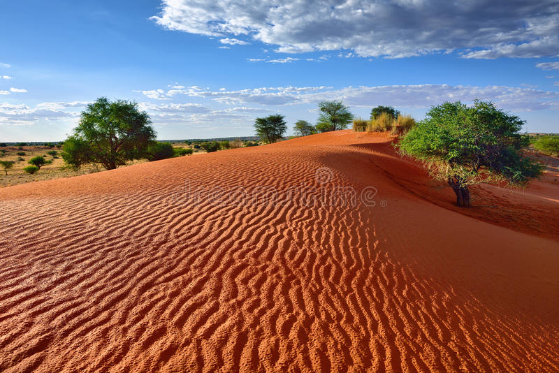 öken kalahari namibia royaltyfri foto