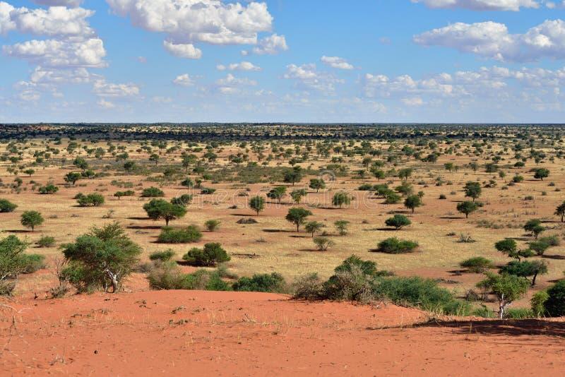 öken kalahari namibia arkivbilder