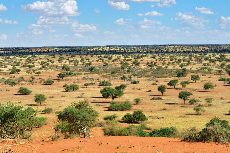 öken kalahari namibia royaltyfria foton