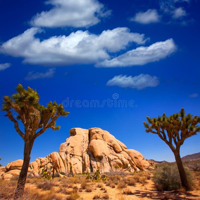 Öken Kalifornien för Joshua Tree National Park Yucca dalMohave arkivfoton