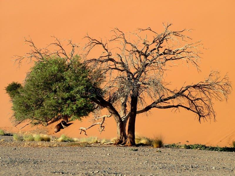 öken namibian arkivfoton