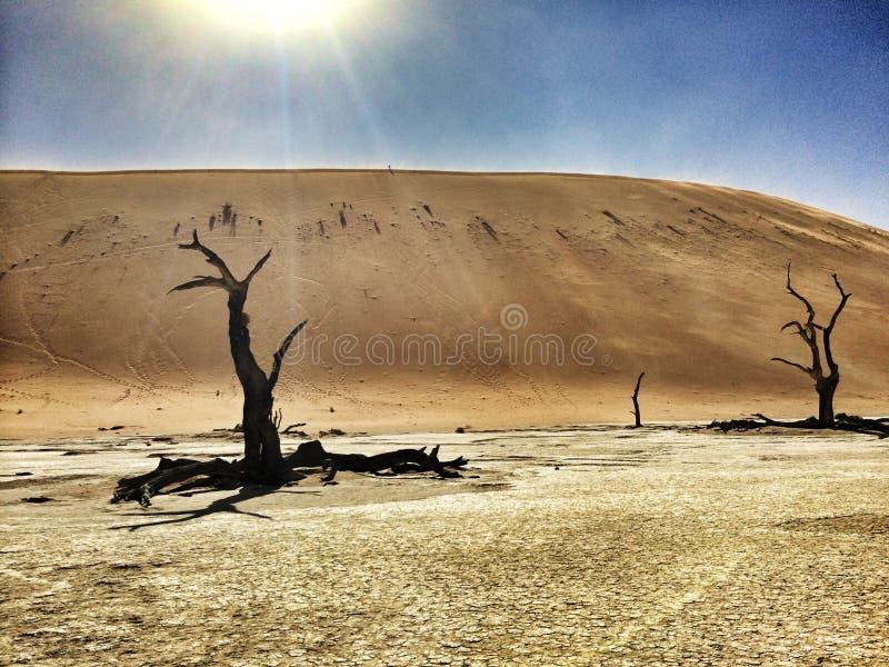 öken namibian royaltyfri bild