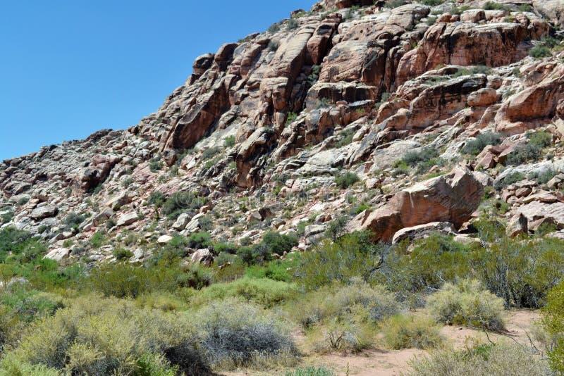 Öken Rocky Mountain arkivfoton