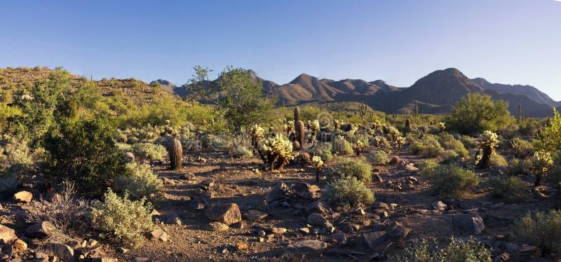 Ökenberg av Arizona royaltyfria bilder