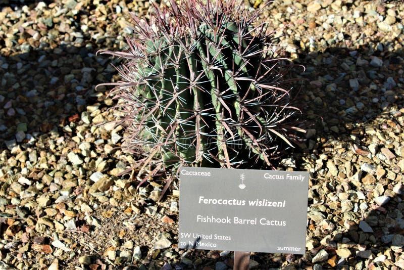 Ökenbotanisk trädgård Phoenix Arizona royaltyfria bilder