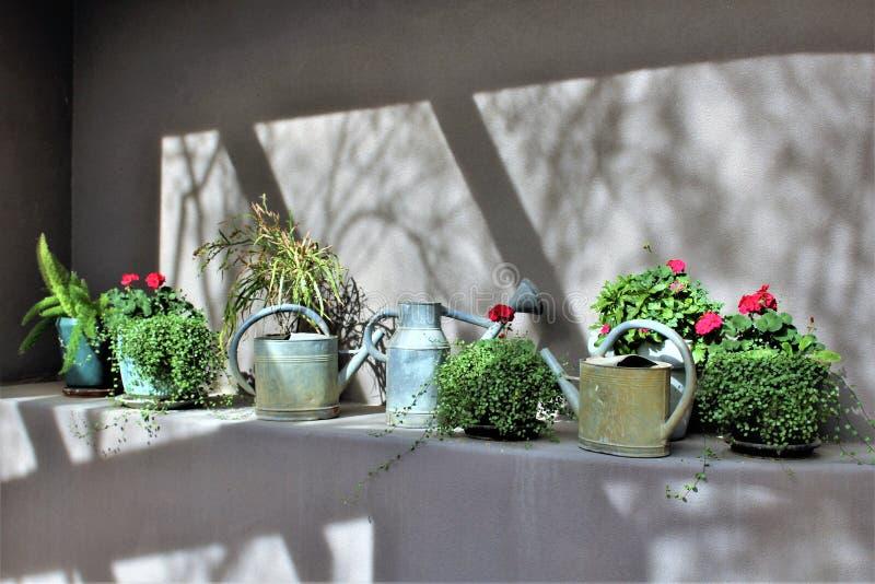 Ökenbotanisk trädgård under vintern som lokaliseras i Phoenix, Arizona, Förenta staterna royaltyfri foto
