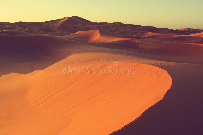 ökendynsahara sand Marocko Afrika Öknar och Sa arkivfoto