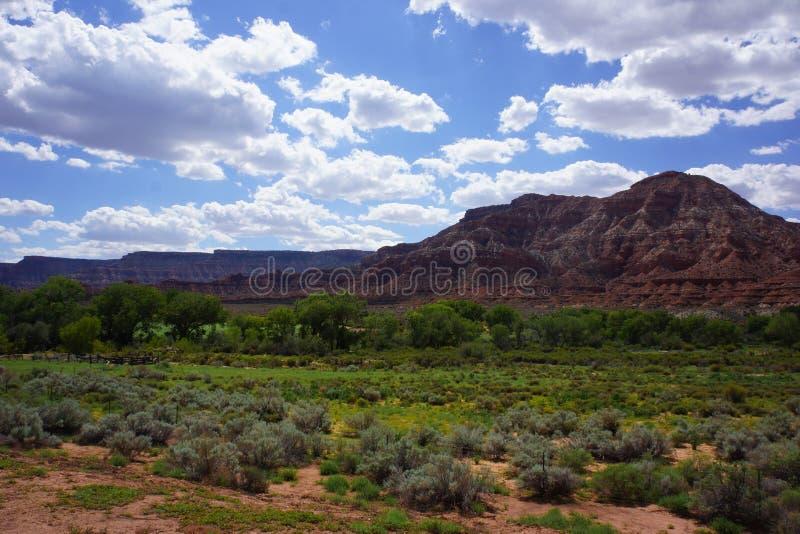 Ökenlandskapröret fjädrar Arizona arkivfoton