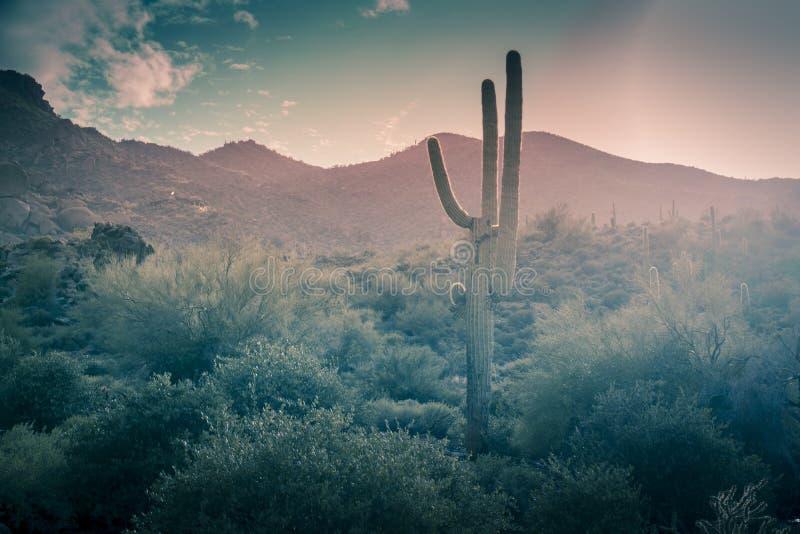 Ökenlandskapregn Phoenix, Arizona, USA fotografering för bildbyråer