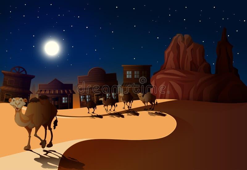 Ökenplats på natten med kamel royaltyfri bild