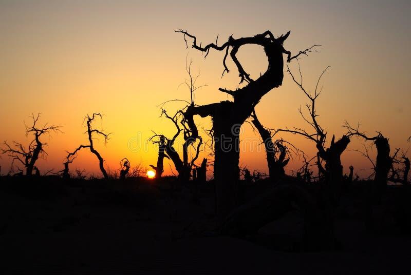 Download ökenpopulus arkivfoto. Bild av soluppgång, tree, dött - 19792338