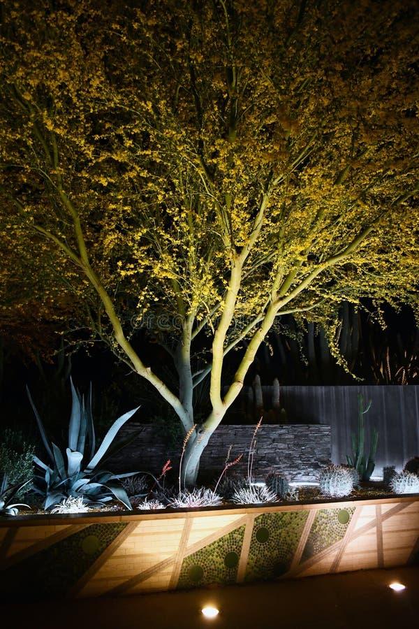 Ökensikt av trädet på natten royaltyfri fotografi