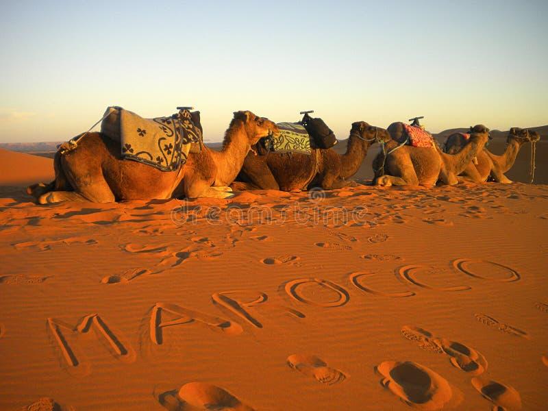 Ökensolnedgång - Marocco arkivfoton