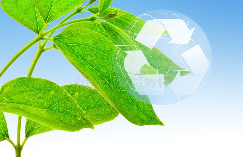 Ökologiekonzept stockfoto